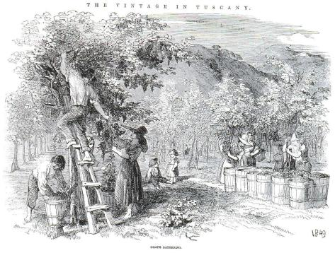 Elm_and_the_vine
