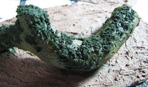 Fallen branch close up moss