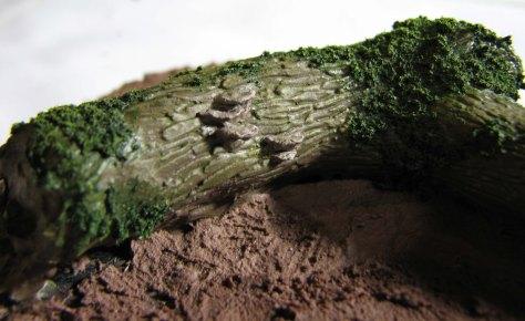 Mushrooms on bark washed
