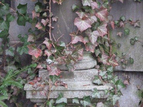 ivy-on-stone